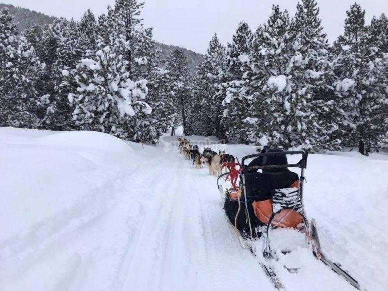 Descubre los parajes nevados de Grandvalira en trineo de nieve