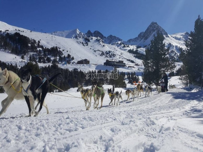 Escursione di mushing a Grandvalira