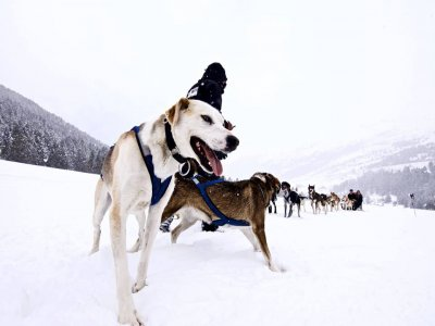 Snowmobile and Dog Sledding tour in Grandvalira