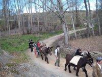 Donkey Ride through Aliste