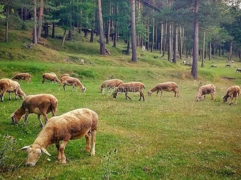 Animales sueltos por el entorno