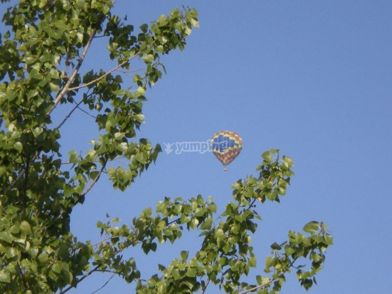 Balloon seen from within the trees