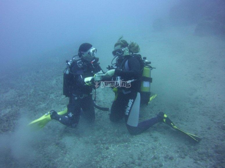 在大西洋潜水