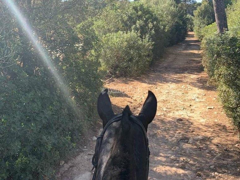 Por los senderos de Menorca a caballo