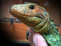 One of the reptiles