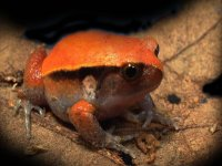 Discover our frogs