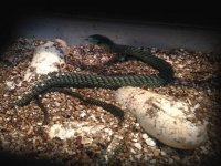 nacimiento de las serpientes