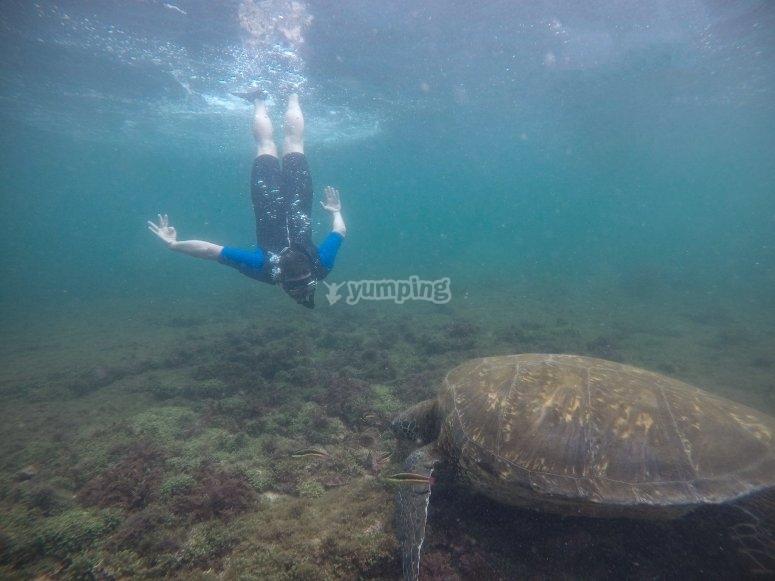 Le tartarughe verdi ci visitano nelle profondità di Radazul