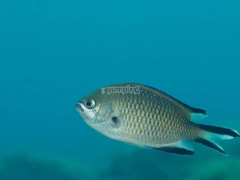 La vita marina di Tenerife