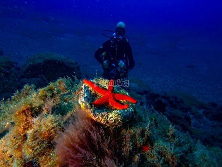 Buceando por las profundidades de Radazul