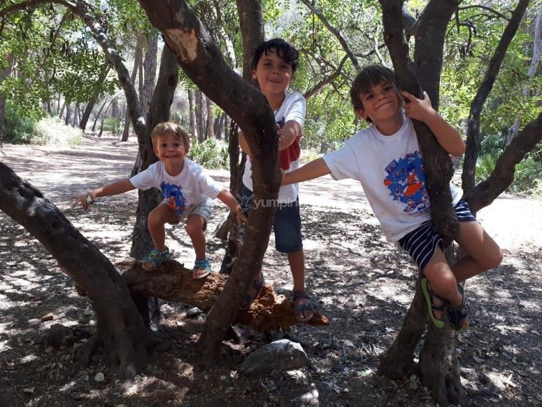 Jugando en los árboles