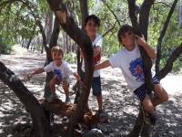 Actividades varias entre árboles en el Parque Pinar de Nagüeles