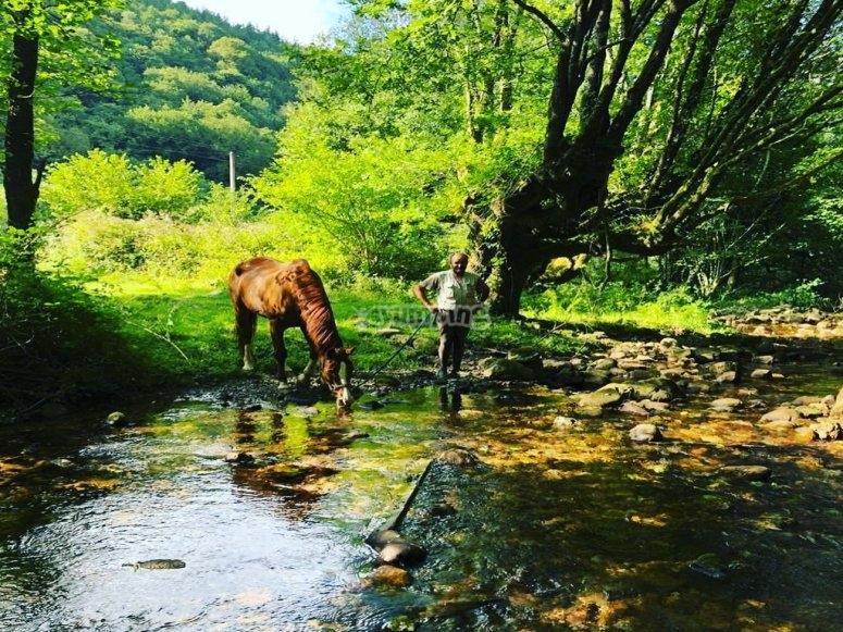 Splendidi luoghi della Navarra per viaggiare a cavallo