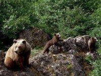 podemos encontrarnos con los osos