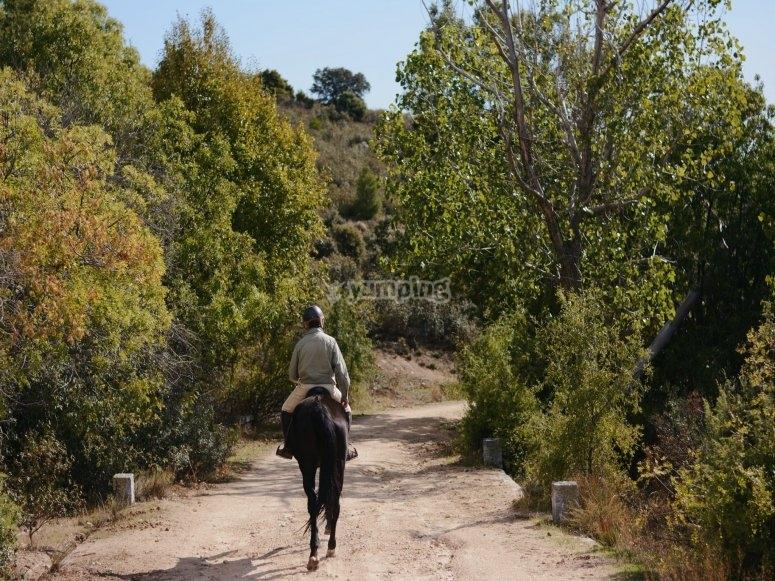 Tour by Sierra de Guadarrama on horseback
