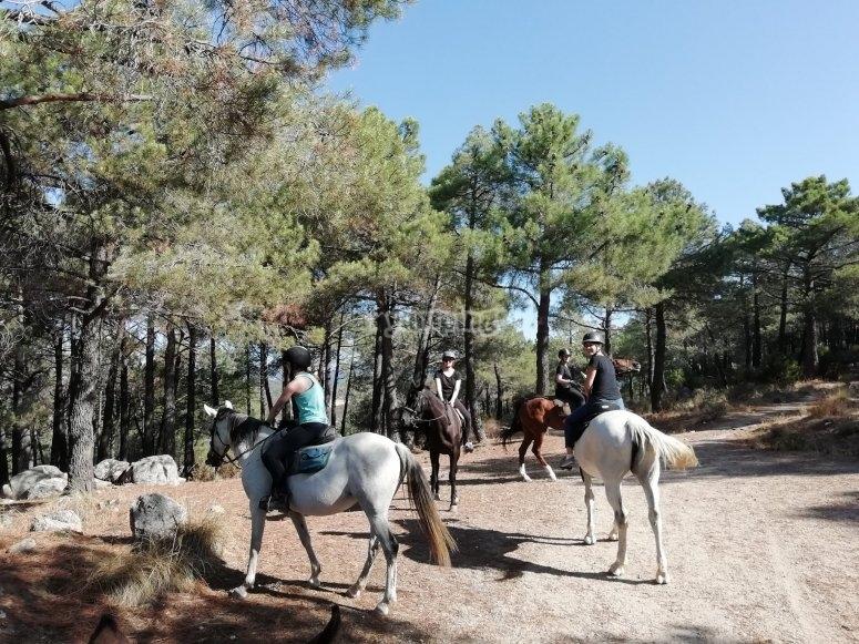 Ruta a caballo Sierra de Guadarrama