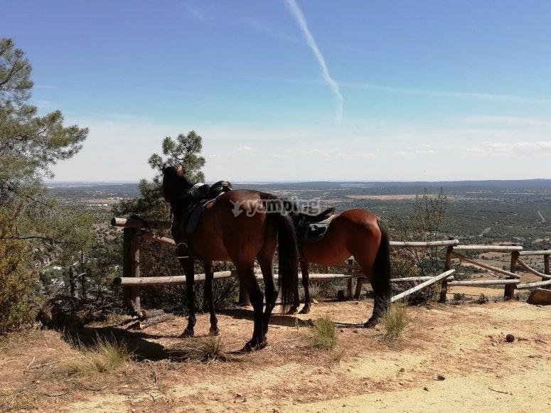 Momento de descanso del paseo a caballo por la Sierra de Guadarrama