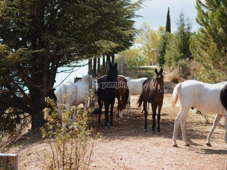 Nuestro equipo de expertos caballos al completo