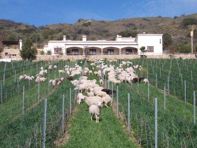 参观有机酒窖Paraje Frontones