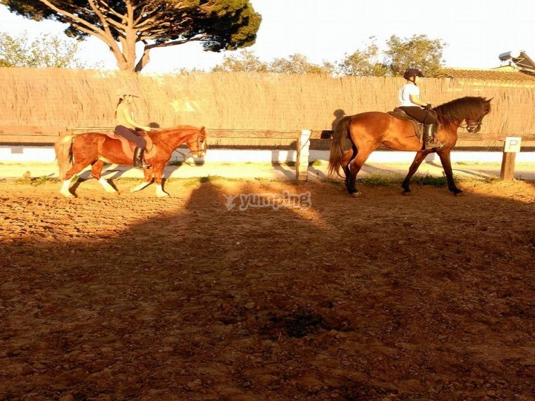 Initiation to dressage in Chiclana