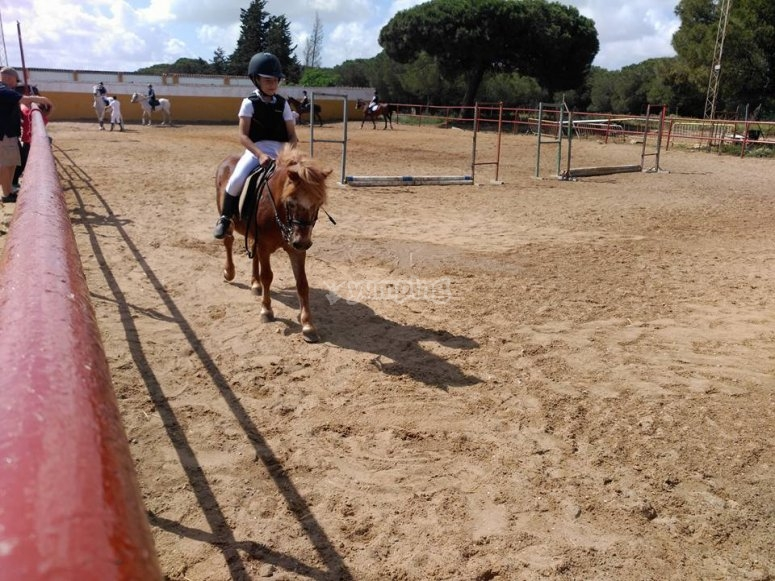 Circuit of jumping of obstacles on horseback