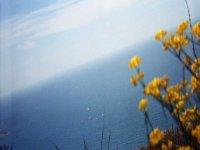fiori con il mare Mediterraneo sullo sfondo