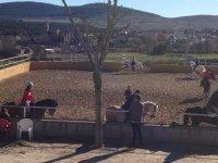Horse riding class groups Buitrago de Lozoya 1h