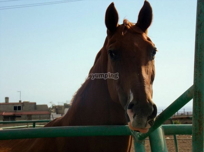穿越大加那利峡谷的马匹