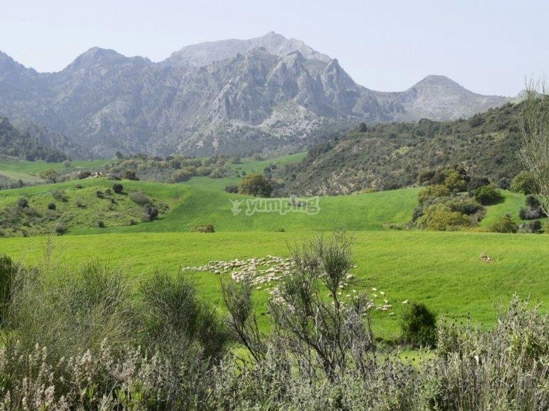 Entorno natural en Antequera