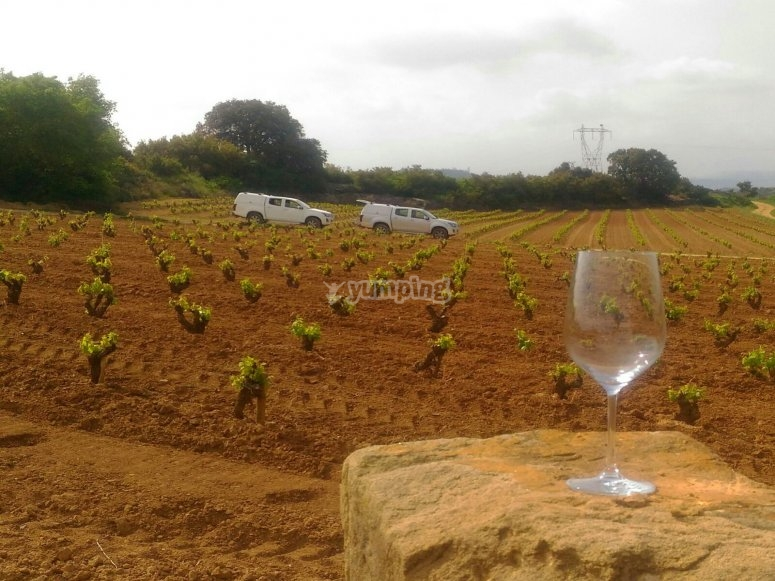Wine glass in front of the vineyards