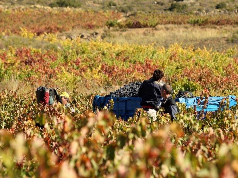 拉里奥哈(La Rioja)酿酒厂的老式日子