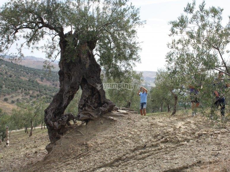 Paseo en 4x4 por campo de Sierra de las Nieves