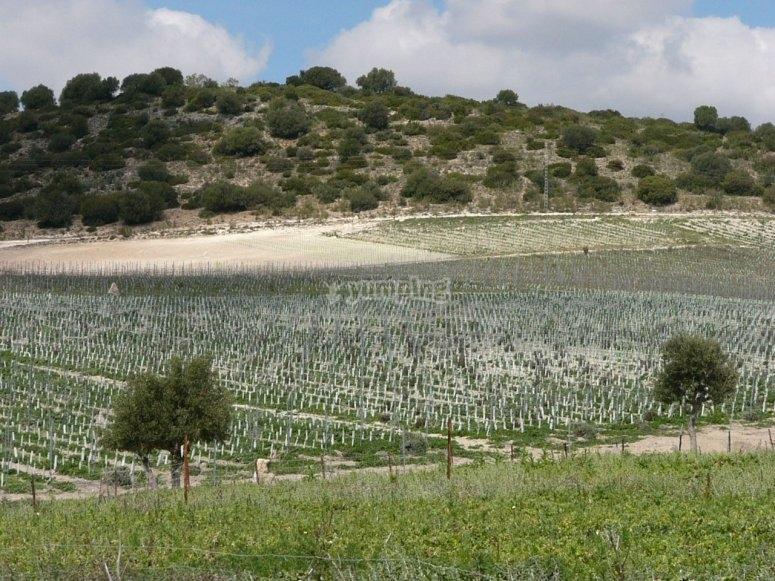 阿尔科斯-德拉弗龙特拉的葡萄园之旅