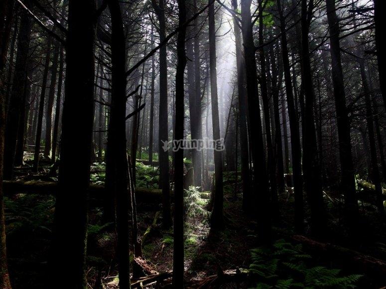 Resuelve los misterios de la casa del bosque