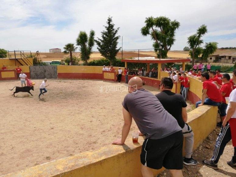 Celebrate a capea in Salamanca