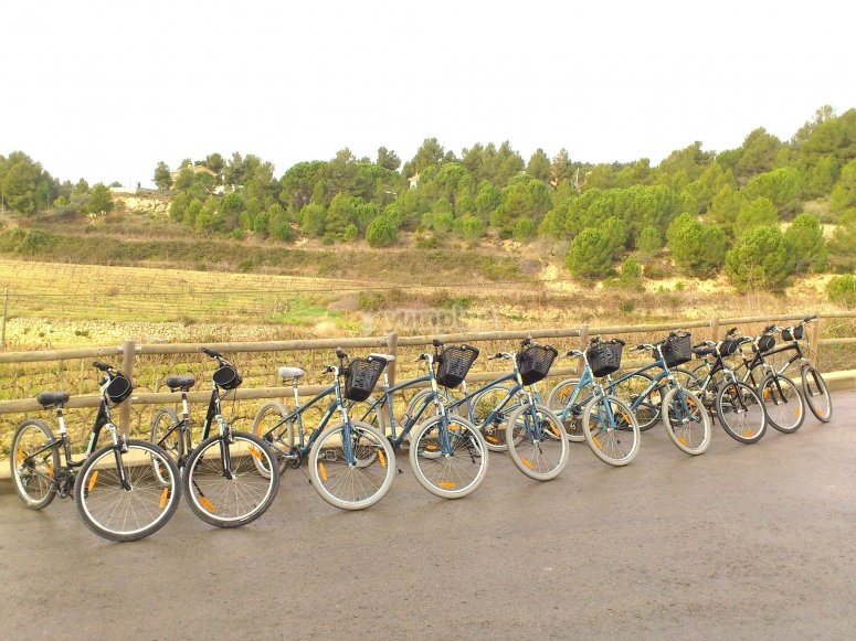 我们在Lavern租用山地自行车