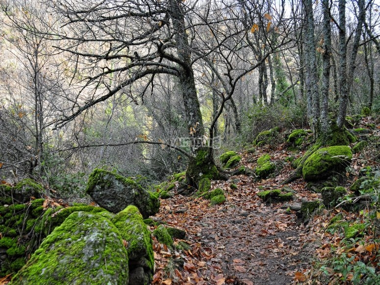 Colorido Valle del Jerte en otoño