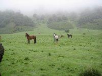 Cavalli nella nebbia