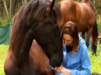 Sentiamo l'amore per i cavalli