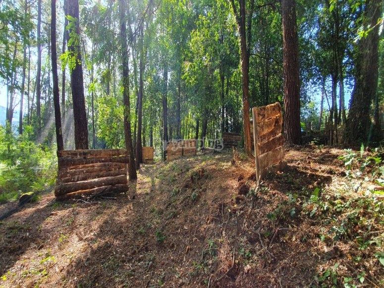Tavole di legno in uno scenario naturale