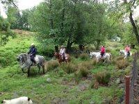 Paseo a caballo con el campo verde