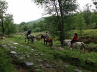 Trotting after the guide