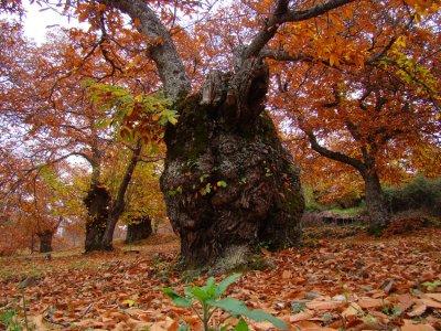 Sentiero escursionistico attraverso l'autunno valle del Genal