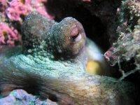 Animales adaptados a la vida marina