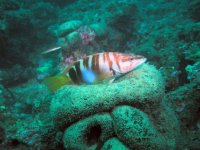 Especies en Tossa de Mar