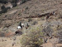 On horses next to Teide
