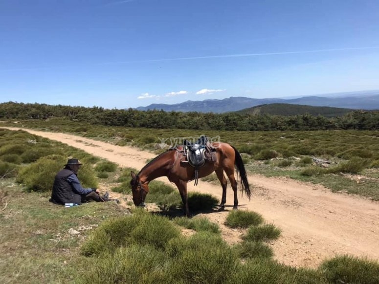 休息马和骑手