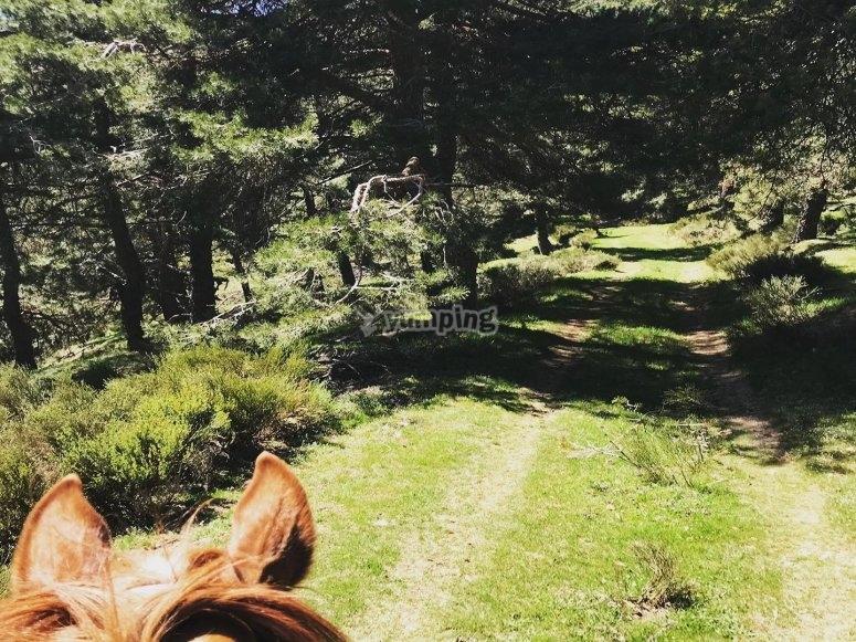 骑马自然步道