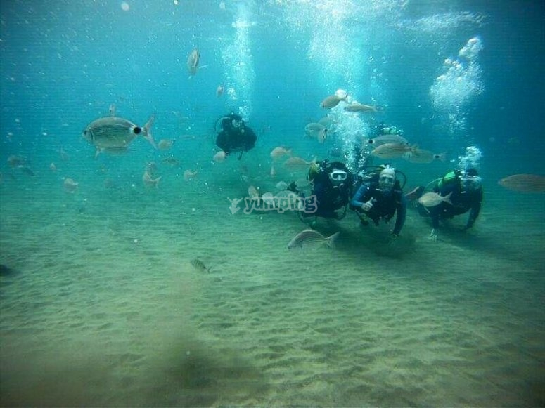 阿雷西费(Arrecife)潜水课程