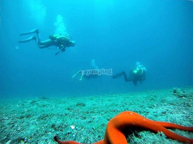 兰萨罗特(OWD)潜水经验